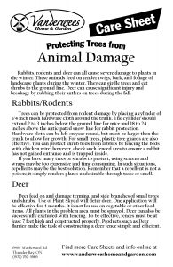 Animal Damage copy