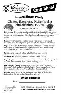 Araceae copy