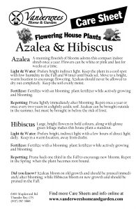 Azalea_Hibiscus copy