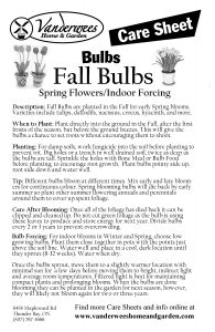 Fall Bulbs copy
