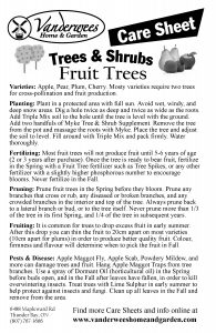 Fruit Trees Large copy