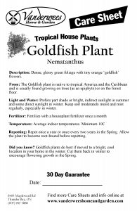 Goldfish Plant copy