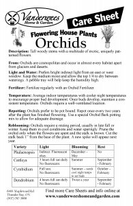 Orchid copy