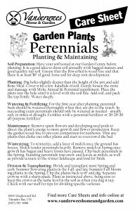 Perennials copy