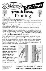 Pruning copy