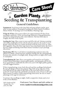 Seeding and Transplanting copy