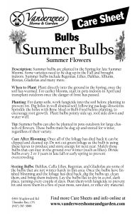 Summer Bulbs copy